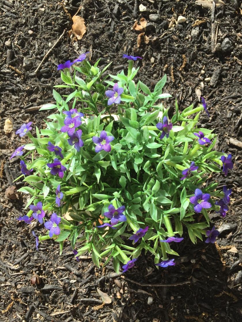 carla weeding